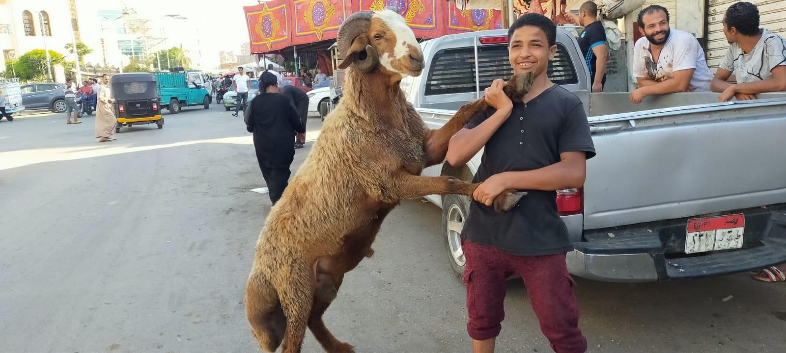 أضخم خروف بمذبح السيدة (1)