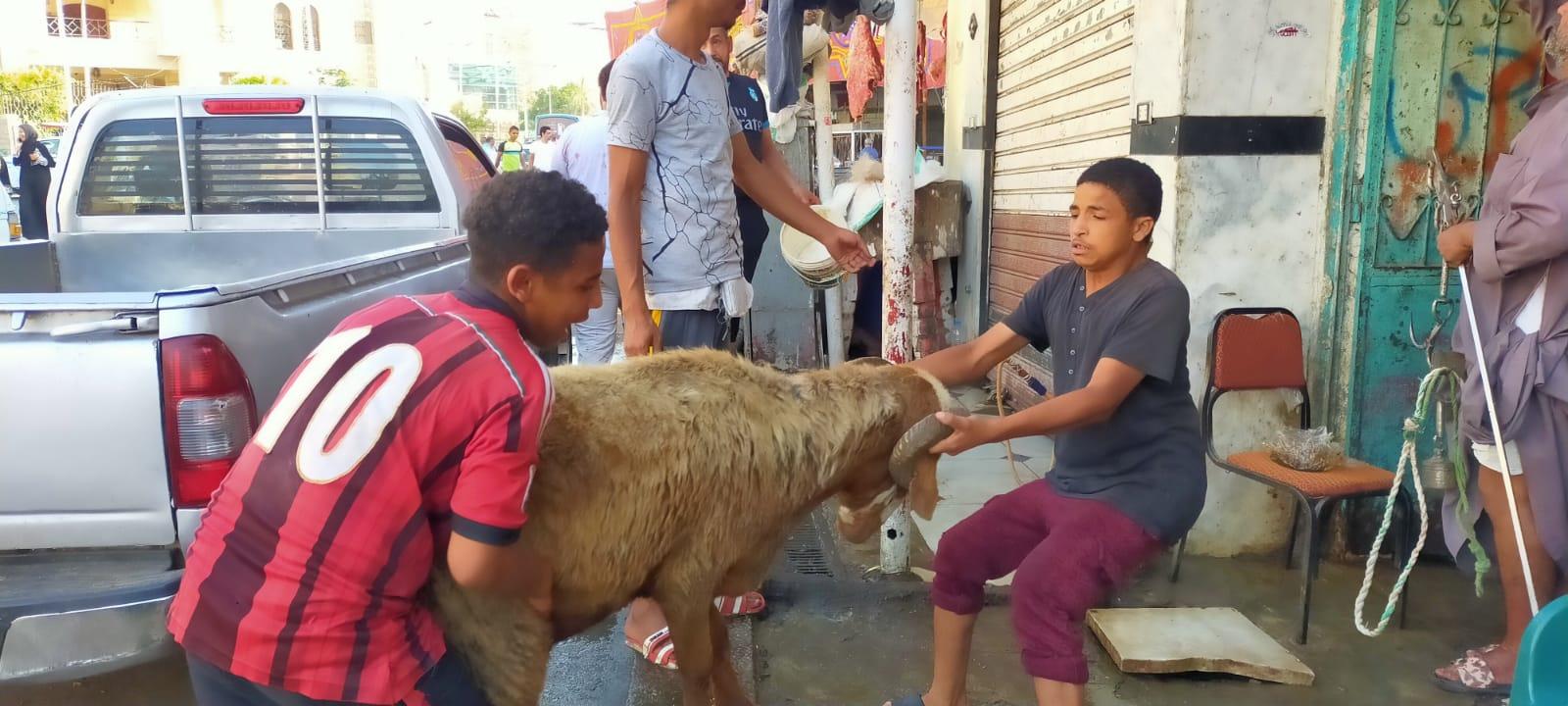 أضخم خروف بمذبح السيدة (13)