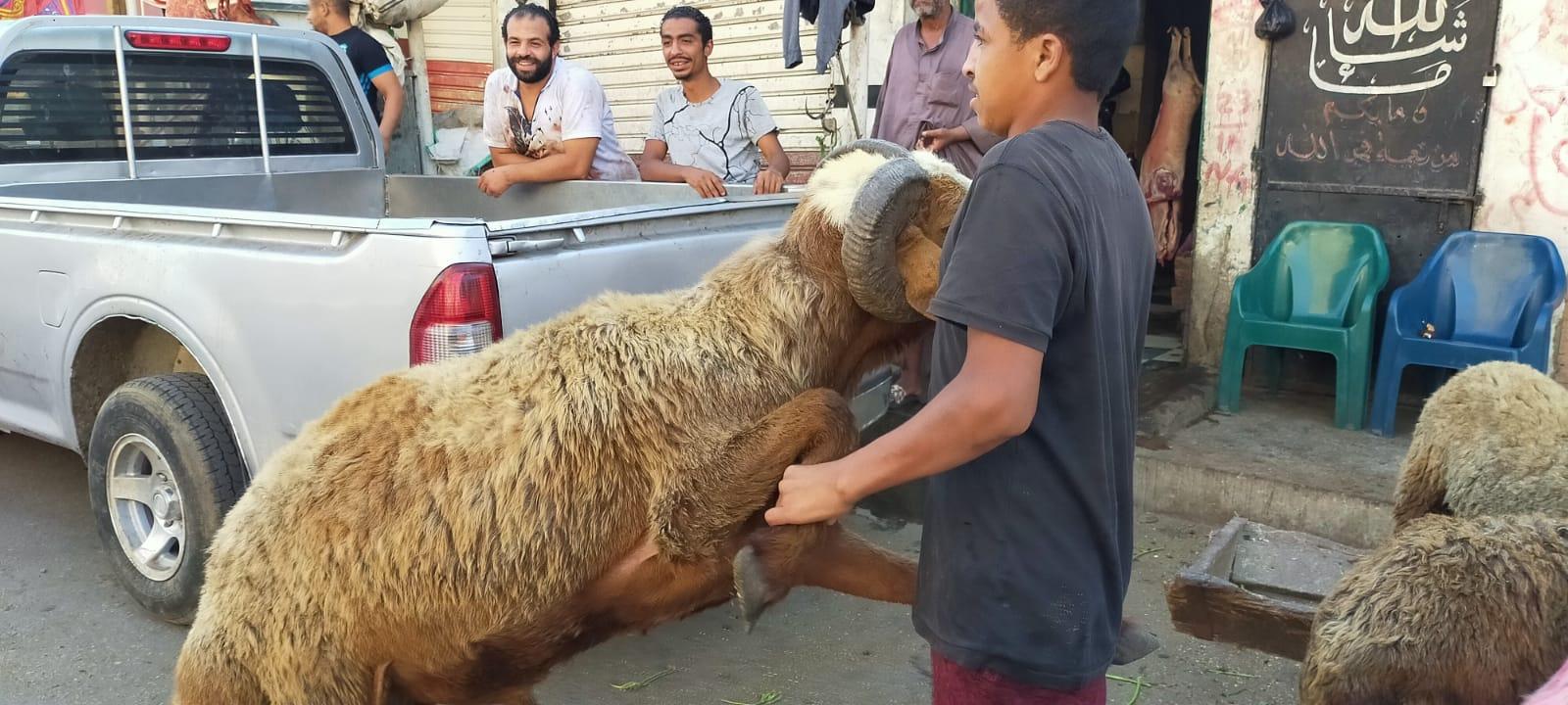 أضخم خروف بمذبح السيدة (24)