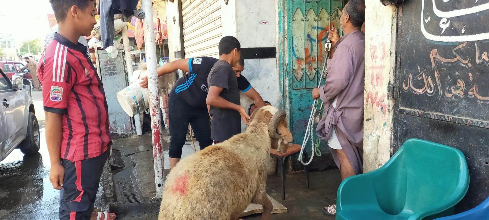 أضخم خروف بمذبح السيدة (18)