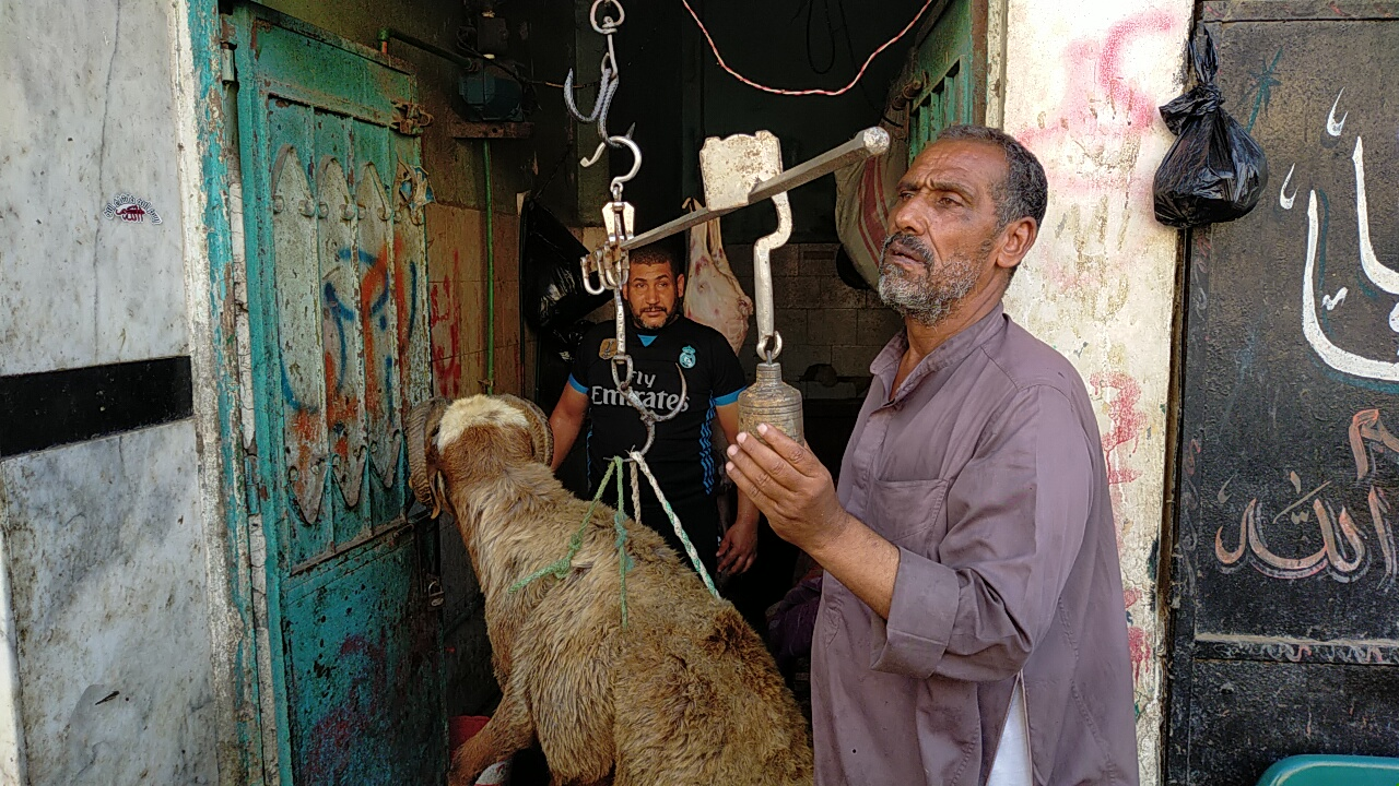 أضخم خروف بمذبح السيدة (15)