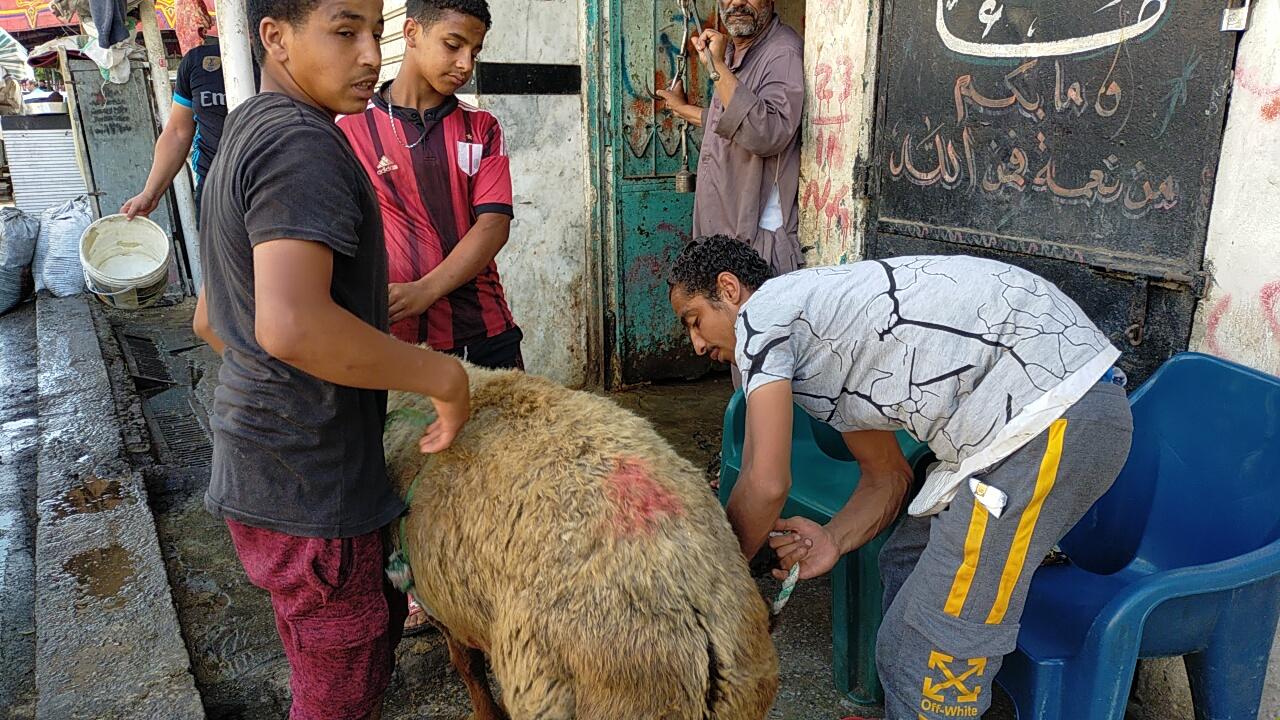 أضخم خروف بمذبح السيدة (19)