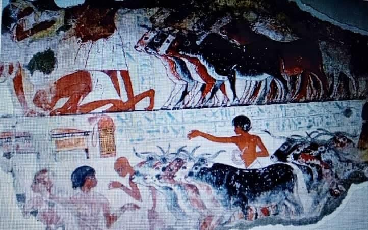 الاضحية عند القدماء المصريين
