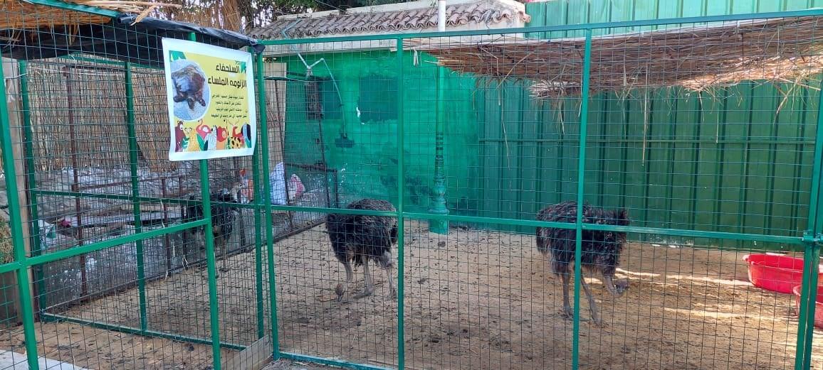 حديقة الحيوان بدسوق