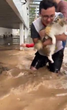 صاحب القطة يستلم قطته