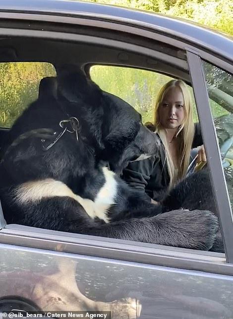 The bear accompanies the girl