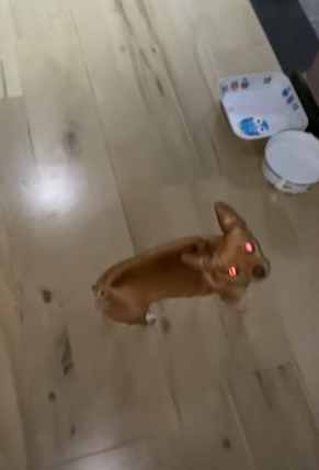 dog with red eyes