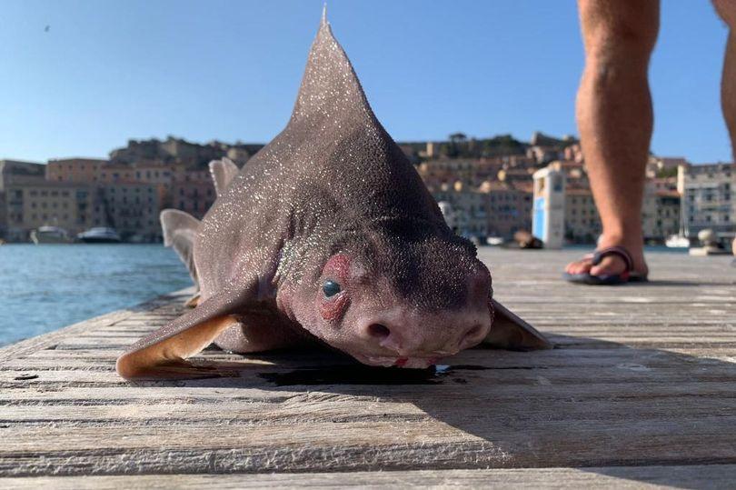 Strange fish spit