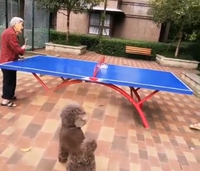 The lady is playing table tennis