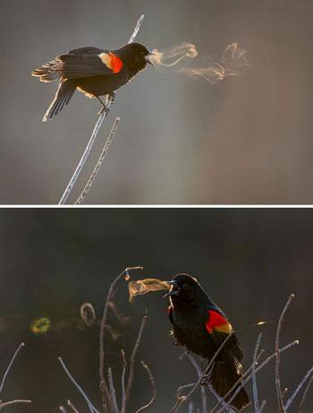 بخار يصدر من الطيور فى درجة البرودة القصوى