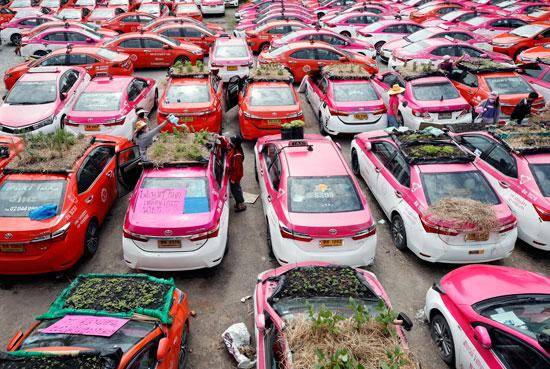 زراعة أسقف السيارات