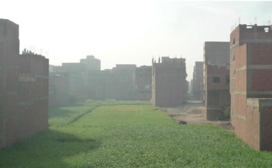 مهندسة تبحث عن تحويل قش الأرز إلى مواد بناء صديقة للبيئة (1)