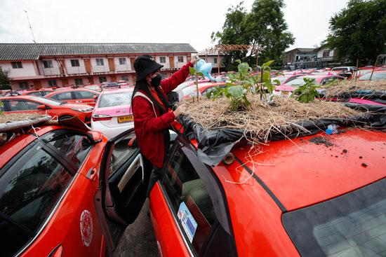زراعة سقف السيارة