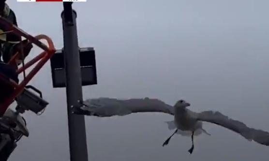 Freeing the bird from the pillar