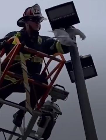 رجل الاطفاء يحرر الطائر