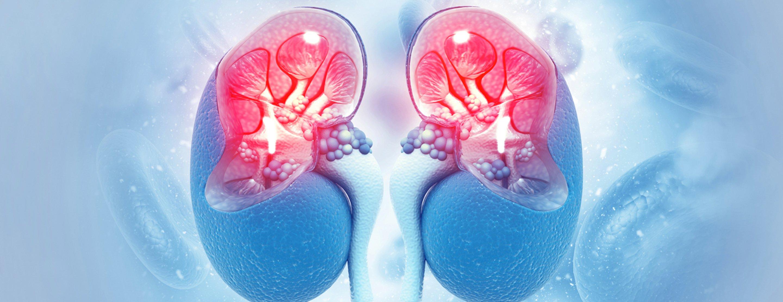 renal-scan-2x