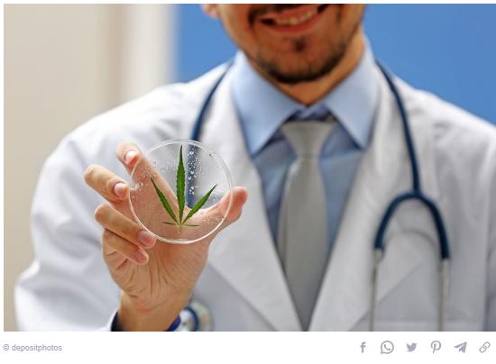 اختبار الماريجوانا الطبية