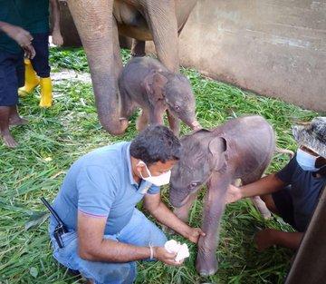 The birth of elephants