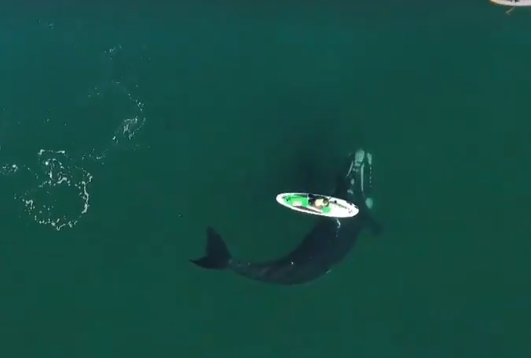 whale under the boat