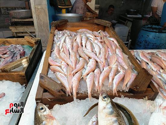 عروض-متنوعة-للاسماك-الطازجة