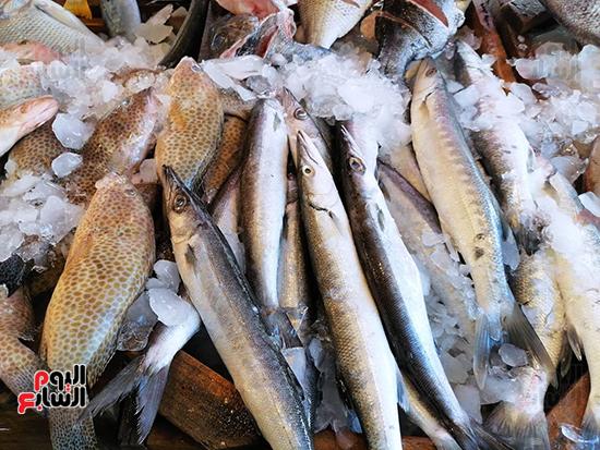 اسماك-المكرونة-او-البربونى-السويسى