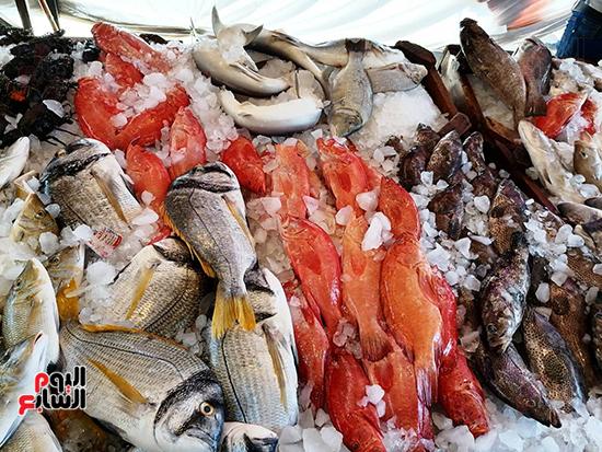 سوق-الانصارى-للاسماك-بالسويس