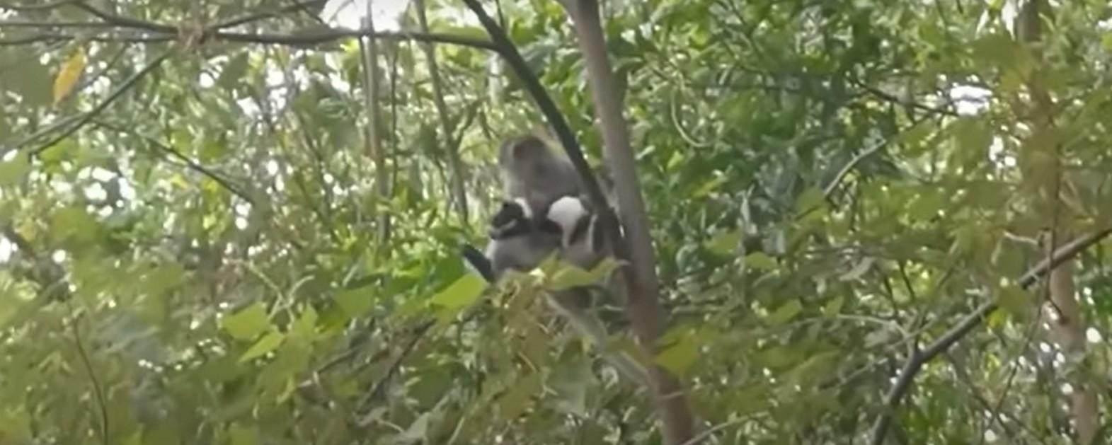 القرد يمسك بالكلب الصغير أعلى الشجرة