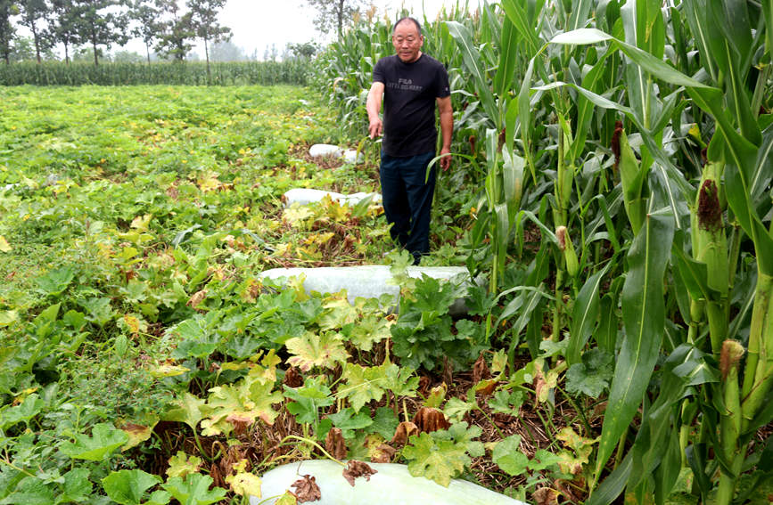 The farmer in front of the watermelon