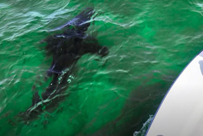 Sharks near the boats