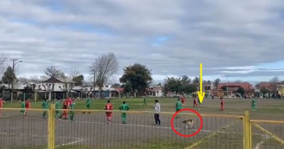 The dog is moving towards the ball