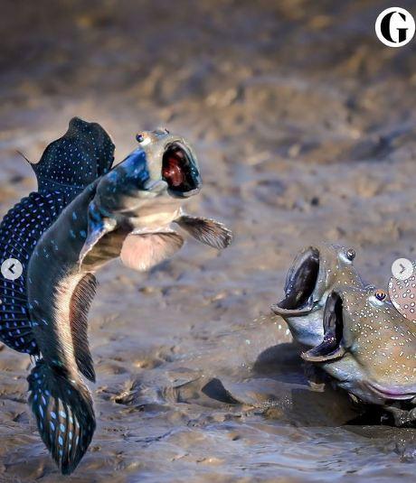 Funny shot of 3 fish