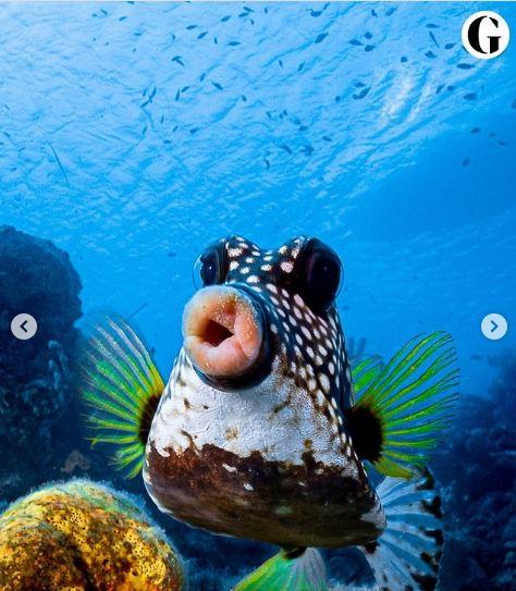 eccentric fish