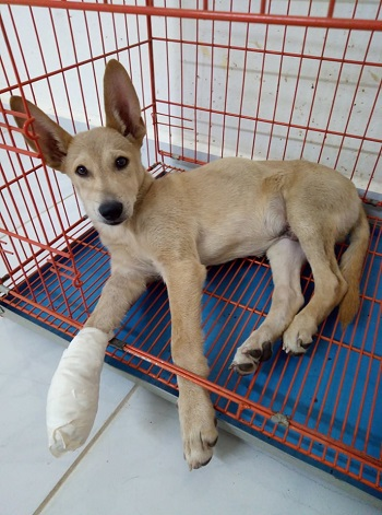Lulu during treatment