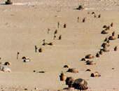 ألغام أرضية - صورة أرشيفية