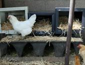 بيت لطعام طيورك المنزلية
