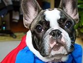 كلب يرتدى زى سوبر مان