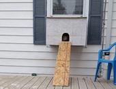 واجهة صندوق القطط