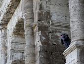 الرجل الذى تسلق مدرج كولوسيوم روما