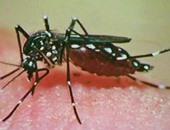 البعوض الحامل للفيروس حمى الدنج