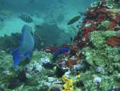 القرن الـ21 سيشهد انقراض العديد من الأسماك البحرية