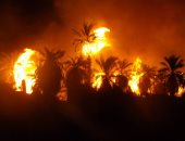 حريق مزارع نخيل بالوادى الجديد