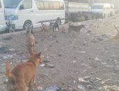 أهالى المرج يشتكون من تراكم القمامة وانتشار الكلاب الضالة