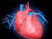 القلب - أرشيفية