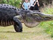 أضخم تمساح فى العالم