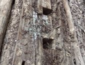 قطعة خشبية من مركب خوفو