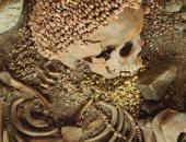 جمجمة بشرية قديمة