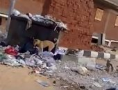 القمامة والكلاب فى شوارع مدينة بدر
