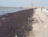ظهور ملوثات بيئية على شاطئ بورسعيد