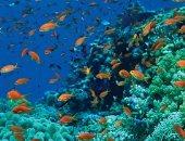 الشعاب المرجانية فى البحر الأحمر