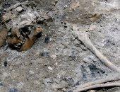حفريات قديمة